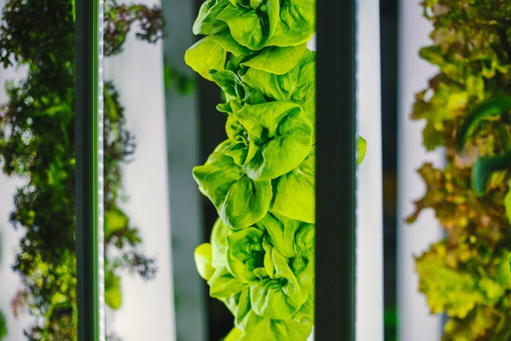 Hightech glastuinbouw belangrijke oplossing voor verduurzaming voedselsysteem